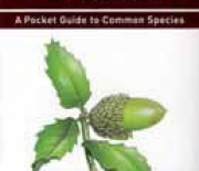 Trees and Shrubs of Israel : A Pocket Guide to Common Species - A Review